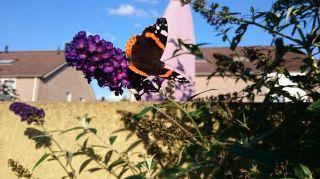 Vlinder in vlinderstruik