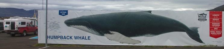 Iceland2016-1187