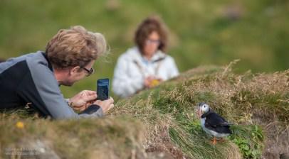 Fotografen und Papageitaucher auf dem Vogelfelsen Látrabjarg, Island