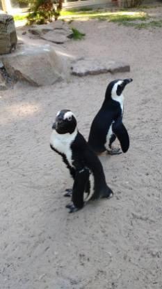 Zoo 20 augustus 2016 (16)