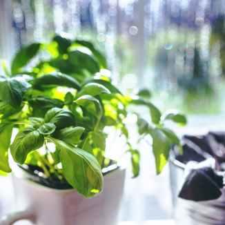 cup-leaf-spring-leaves