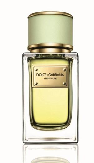 Dolce Gabbana Velvet Pure