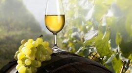Виноградно-винодельческий регистр утвержден и запущен в тестовом режиме