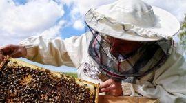 Пчеловоды северных районов объединились в региональнную ассоциацию