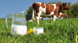 По итогам 2016 года производство молока в РФ составит 30 млн тонн