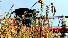 Bloomberg: Россия обогнала США по экспорту зерна