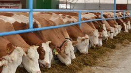 Проектирование экологических ферм