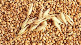 В Украине продолжают расти цены на пшеницу и рапс