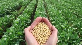 Турция наращивает импорт сои из-за роста спроса на мясо птицы
