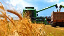 Бельгия: фермеры собрали худший за 30 лет урожай