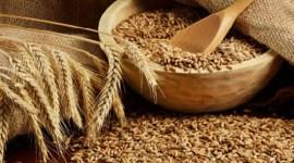 Срок возврата продовольственной пшеницы, отпущенной ранее из госрезервов Молдовы в целях освежения, продлен до 1 декабря 2017