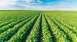 В Сынжерей стартовал трансграничный проект по развитию инновационного сельского хозяйства