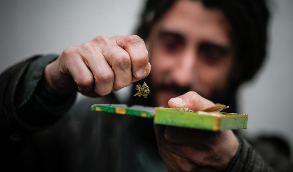 Estudia Argentina despenalizar consumo de marihuana y el autocultivo
