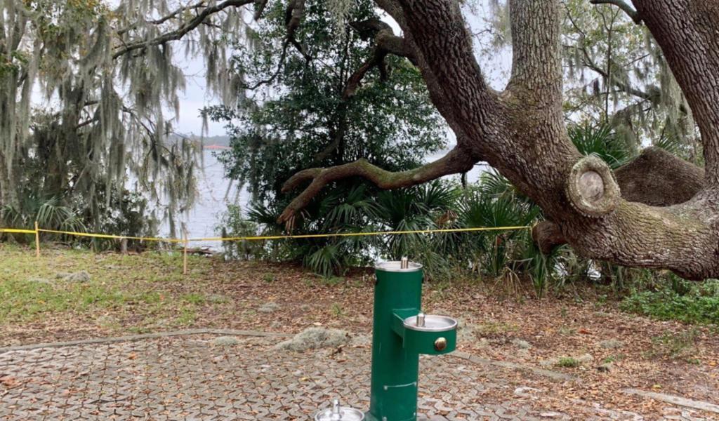 Apareamiento de serpientes en lago de EUA se convierte en atracción nacional