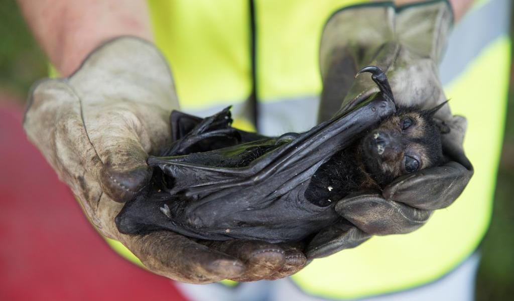 Murciélagos, atacados con fuego en Perú