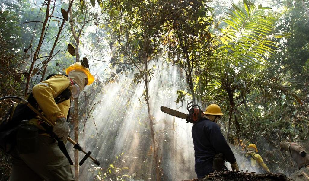 Tomarán medidas para detener tala de árboles