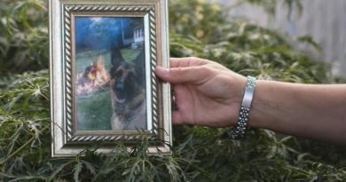 Fallece el primer perro diagnosticado con COVID-19 en EUA