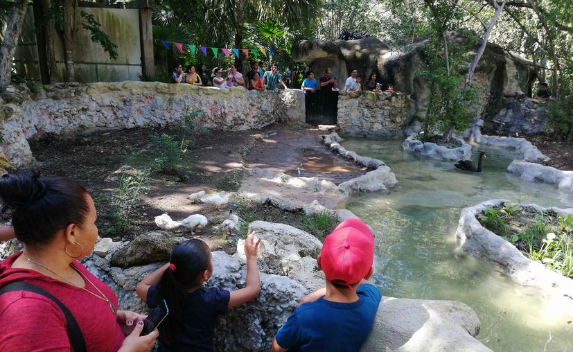 Chetumal: Disfrutan familias del 40 aniversario del Zoológico Payo Obispo