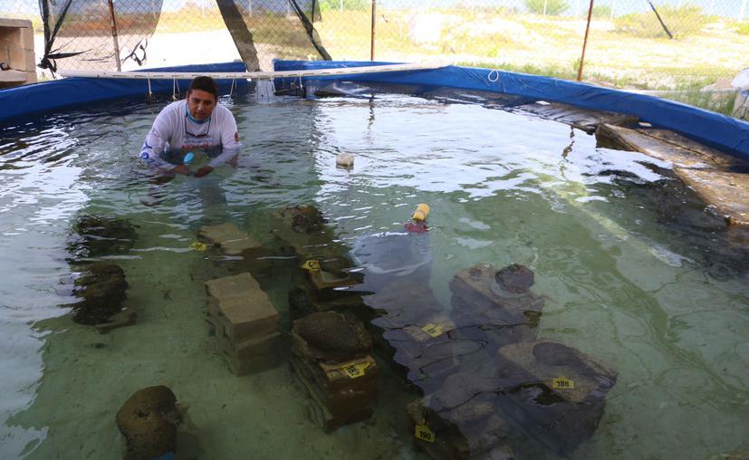 Cancún: ¡Histórico! Logran por primera vez en México reproducción sexual de corales en cautiverio