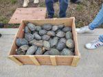 Aseguran en AICM 15 mil tortugas que iban a exportar a China (VIDEO)