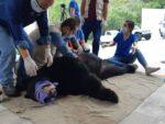 Oso es capturado vivo por grupo de vecinos en Monterrey (VIDEO)