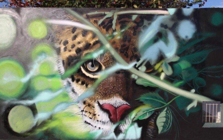 Animales salvajes invaden el centro de Cancún (Galería)