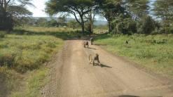020 safari 4