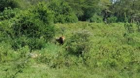 029 safari JP 5