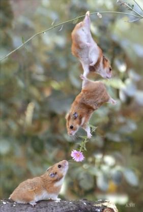 amor-esquilos1