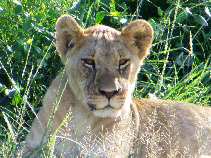 Warum Ihr Eine Safari In Kenia Machen Solltet  Lieben
