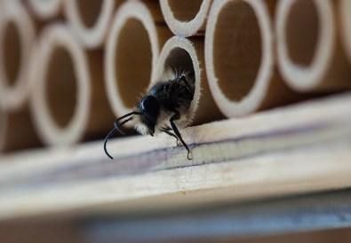 trauhaus für bienen selber bauen