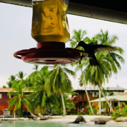 Kolibri gucken im Casa Acuario