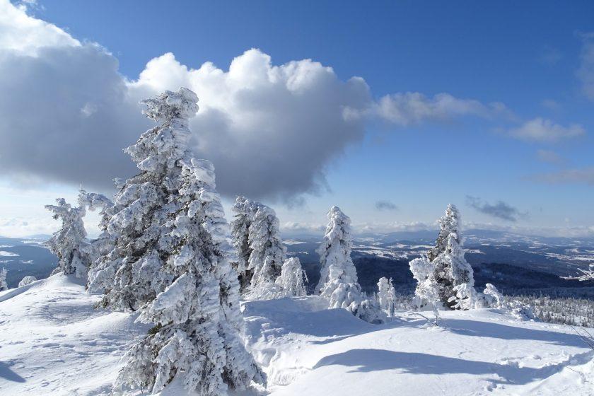 Bayerischer-Wald_Foto_Kevin_Lorenz