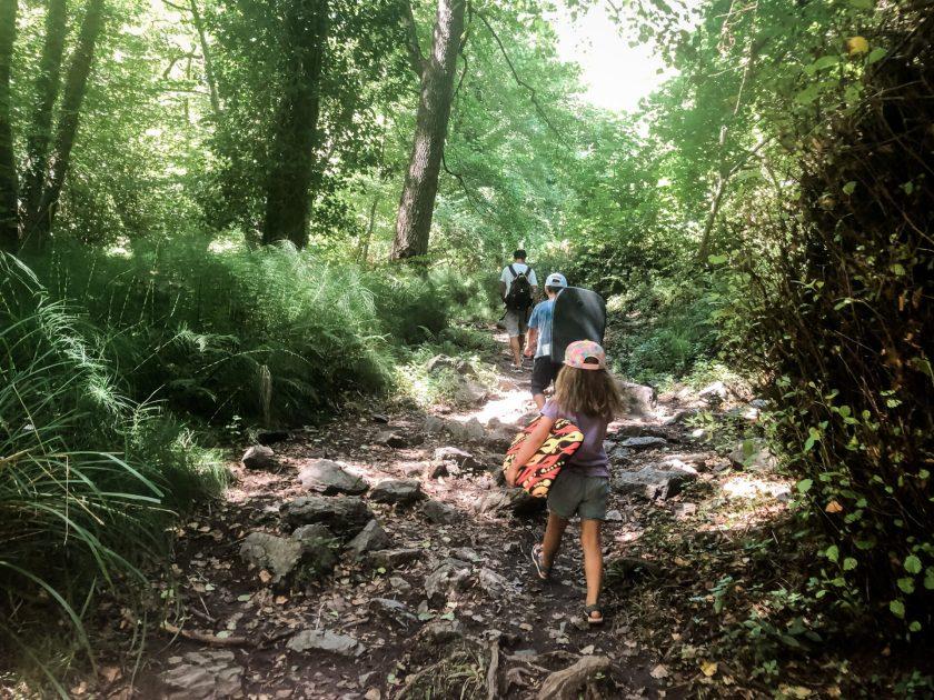 Urwald-Feeling im Wald