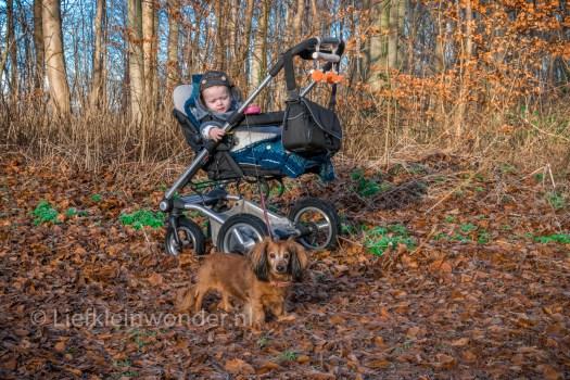 12 maanden en 3 weken oud 1 jaar , hond uitlaten met kinderwagen wandelen in het bos