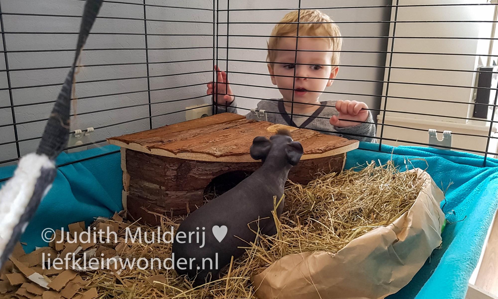 Jayden anderhalf jaar oud peuter dreumes -Bij de skinny cavia's kijken