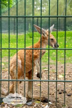 een dagje naar de dierentuin blanckendaell park www.liefkleinwonder.nl mama blog peuter dagje weg peuter