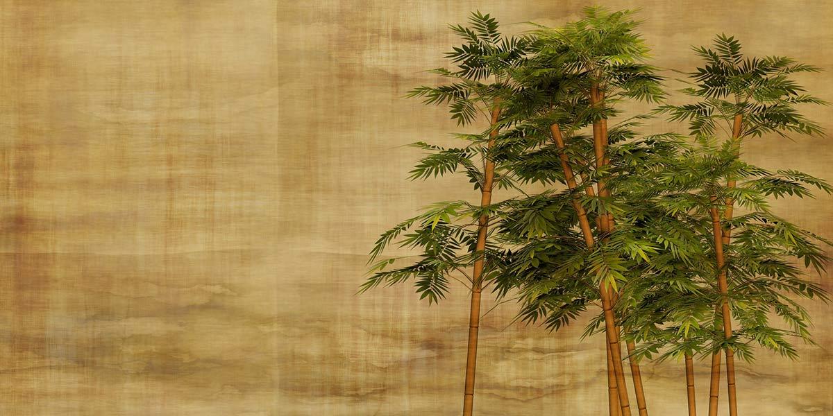 Le bambou l'alternative aux plastiques à usage unique