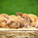 【心理テスト】ウサギに何をしてあげる?