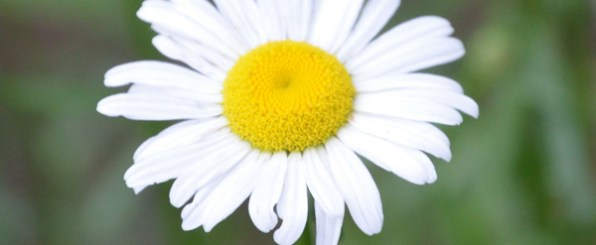 【心理テスト】1輪の花に…。