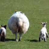 【心理テスト】羊とオオカミ