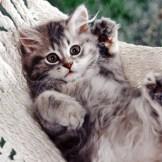 猫好きにはたまらない!悶絶しちゃうほどカワイイにゃんこグッズ!