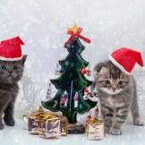 ペットと楽しむクリスマス&お正月