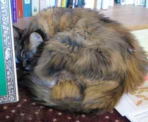 Nalla the cat napping with books