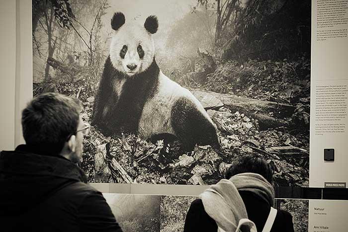 Een world pressfoto bij een blog over de reuzenpanda