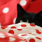 Zijne Koninklijke Zeikerd Prins Doezel drijft zijn kattenvrouwtje tot wanhoop