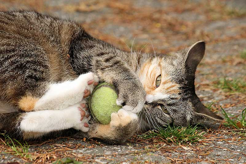 6 Levenslessen van je kat