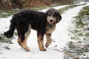 Fotoserie: Pepper en Harley in de sneeuw
