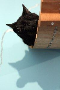 Kattencafé Mispoes!