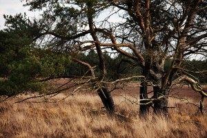 Fotoserie: Herinneringen aan de heide